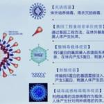 中国研究团队:灭活疫苗接种后中和抗体11-70天到高峰,之后逐渐下降